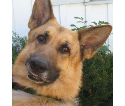 Monrovia, Duarte, Bradbury Azusa Dog Bite Attorney is a Legal Services service in West Covina CA
