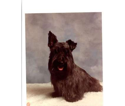 jackie's grooming is a Veterinarians service in Sunland CA