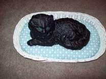 Antique Ironart Cast Iron Black Cat