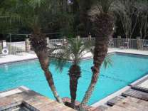 1 Bed - Cypress Lake Apartments