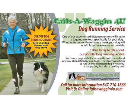 Tails-a-Waggin 4U Dog Walker, Pet Sitter, Dog Runner Buffalo Grove, IL is a Dog Walking service in Buffalo Grove IL