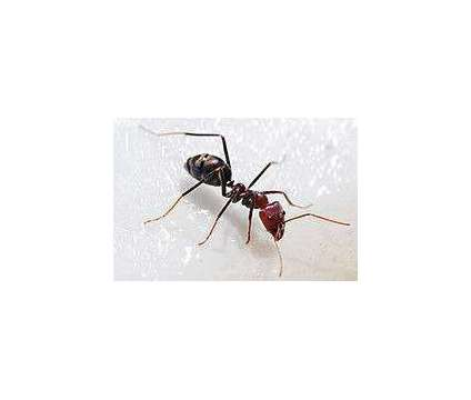 Problem with Roaches, Mice, Ants, Spiders, Bed Bugs, or any other Pests in Your is a Pest Control service in Las Vegas NV