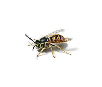 Problem with Roaches, Mice, Ants, Spiders, Bed Bugs, or any other Pests in Your is a Other Home Services service in Las Vegas NV