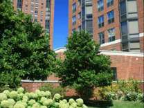 1 Bed - Yankee Hill
