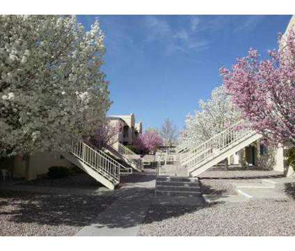 1 Bed - Lifestyles at Renaissance at 4920 Union Way Ne in Albuquerque NM is a Apartment