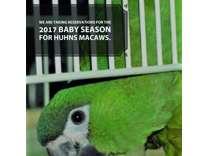 hahns macaws handfed