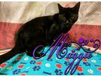 Adopt Maggie a All Black Domestic Shorthair (short coat) cat in Toledo