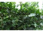 510 Acres Coffee Estate For Sale