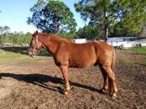 Horse riding privileges