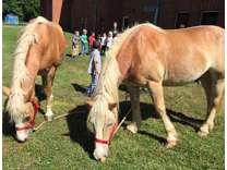 yhtyh Great, Strong Work Horses ( GELDING)