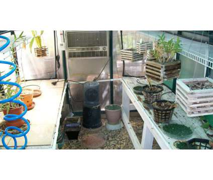 Green House used for Orchid Cultivation is a Green Lawn, Garden & Patios for Sale in Rancho Belago CA