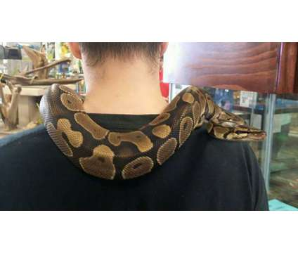 reptiles and feeders is a in Humble TX