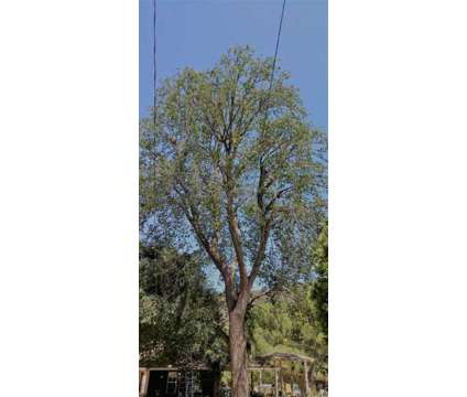 Tree Maintenance & Services is a Tree & Shrub Service service in Los Angeles CA