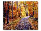 Trademark Fine Art 26 in. x 32 in. Leaf Covered Road Canvas Art
