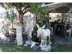 Huge! Yard & Garden Cement Statuary of Mexican Man and his Donkey