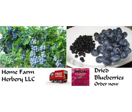Sun Dried Blueberries, Order now, FREE shipping & a free gift is a Food & Produces for Sale in Munfordville KY