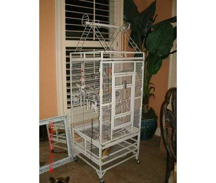 Cockatiels pair and Large Cage is a Male Cockatiel For Sale in Milton FL