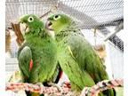 Adopt Petri a Amazon