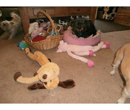 Pet sitting and boarding is a Pet Sitting service in Jacksonville FL