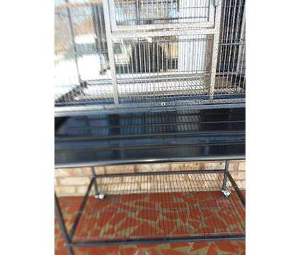 Parrot's cage is a Poicephalus For Sale in Kinston NC