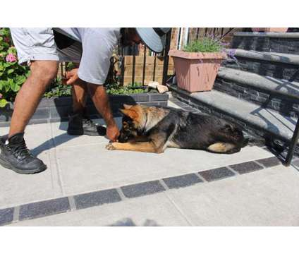 Dog Training Services is a Other Pet Services service in Brooklyn NY