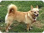 Katherine Bigelow Chihuahua Adult Female