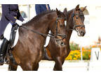 Business For Sale: Wholesaler & Retailer Of Equestrian Products