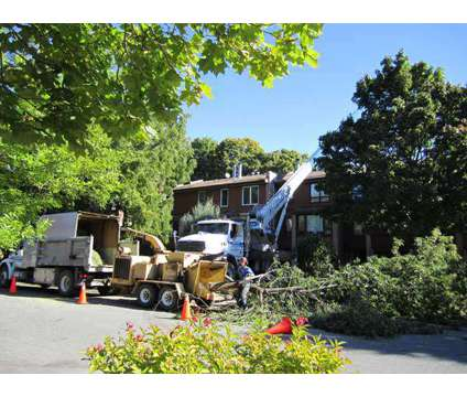 Calgary Tree Service. 349,000 in Calgary AB is a Commercial Property