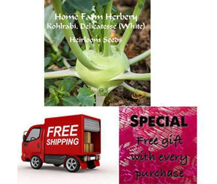 Kohlrabi, Delicatesse (White) Seeds (Heirloom/Non-Hybrid/Non-GMO) Free shipping is a White Lawn, Garden & Patios for Sale in Horse Cave KY