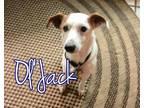 Ol Jack Jack Russell Terrier Senior - Adoption, Rescue