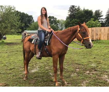 HORSEs sale or trade 350 & 800 mares is a Female Paint in Titusville PA
