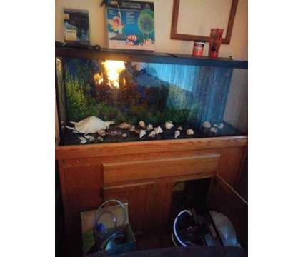 55 gallon fish tank is a in Inver Grove Heights MN