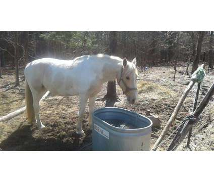 horse is a in Cadillac MI