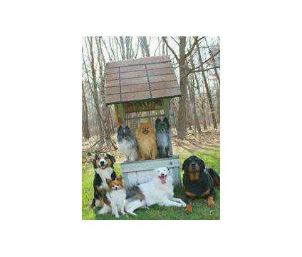 DOG TRAINING CLASSES IN CLARE also IN HOME TRAINING is a in Clare MI
