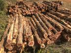 Cedar Fence Posts and Wood Products