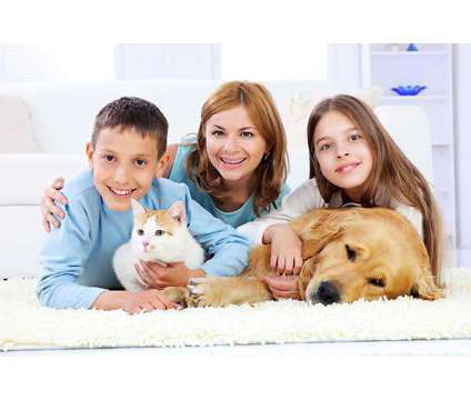 GreenStar Pro Carpet Cleaning, Water Damage, Mold Removal Vernon Hills, Libertyv is a Construction & Remodeling service in Vernon Hills IL