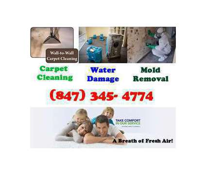Tanin Carpet Cleaning, Water Damage, Mold Removal Glenview, Northbrook, Mt Prosp is a Carpet & Upholstery Cleaning service in Glenview IL