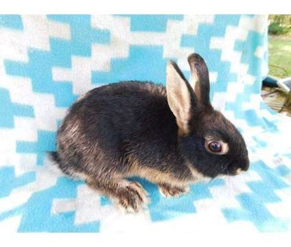 rabbits is a For Sale in Floral City FL