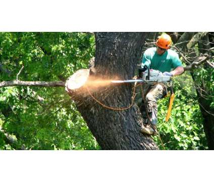 Tree Service & Landscaping - Licensed and Insured ** Good Prices ** is a Tree & Shrub Service service in Brentwood NY