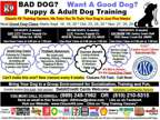 Dog Training Classes In Clio,Bay City and Saginaw