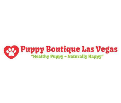 Puppies available is a Puppy in Las Vegas NV