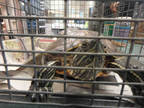Adopt MICKEY a Turtle - Other