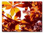 Trademark Fine Art 24 in. x 32 in. Light Coming Through Tree Leaves Canvas Art