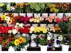 Business For Sale: Flower Shop