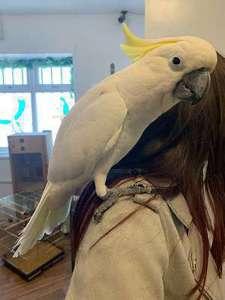 Birds for Sale in Louisiana | Birds & Hatchlings for Sale in LA