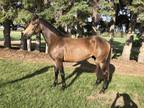 Superb gelding with huge potetial Safe easy fun ride