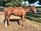 Adopt Clearly Perfection a Thoroughbred