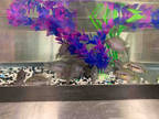 Adopt *LONGSHOT a Fish / Mixed