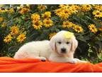 Mutt Puppy for sale in Lykens, PA, USA