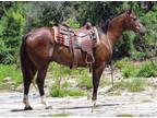 Boots Gentle Gorgeous Ranch Trail Horse